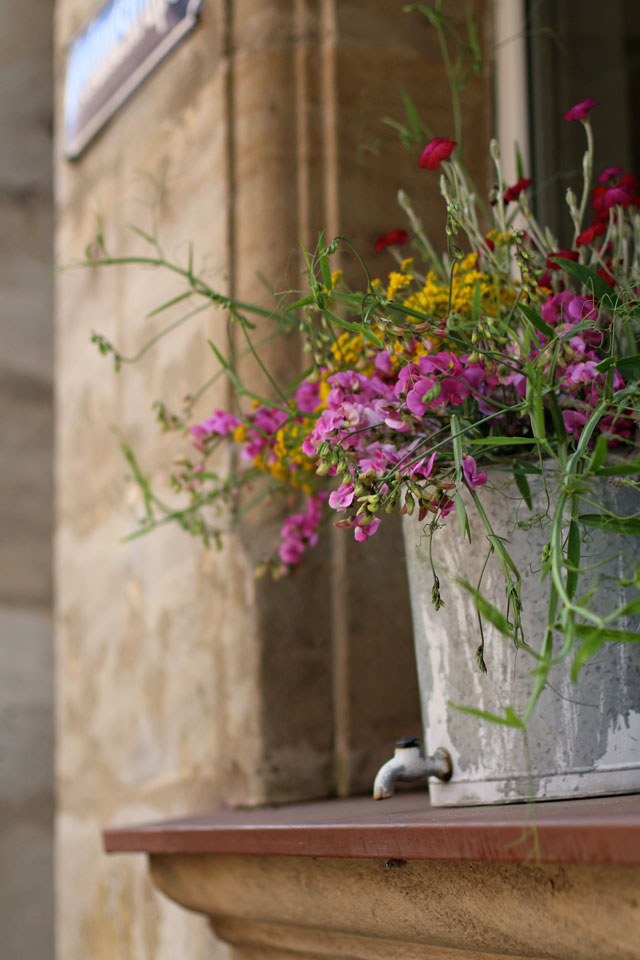 Blumenwiese im Blumentopf