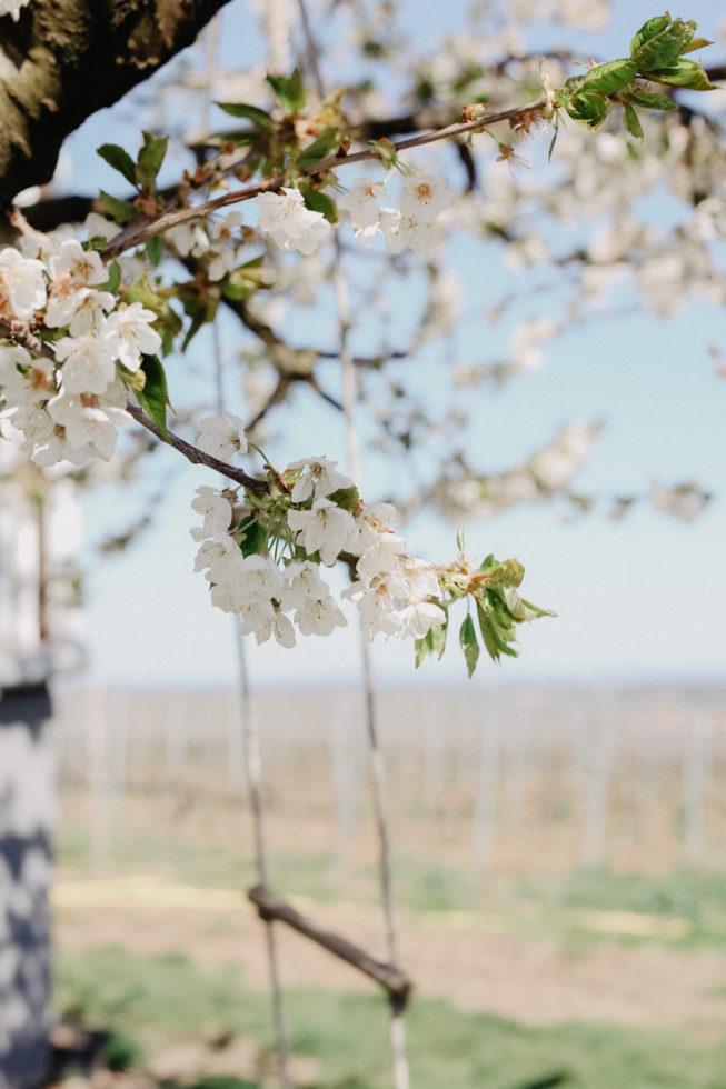 Ausflug in die fränkische Weingegend zum Weingut Mangold in Dettelbach