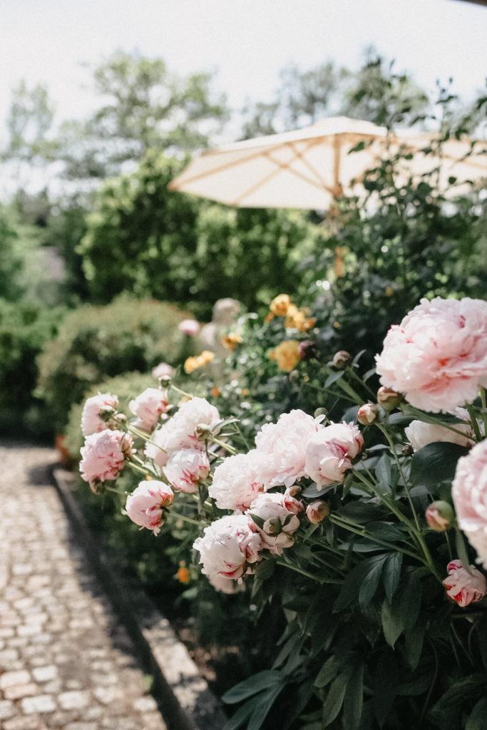 Sommerfest im Garten inmitten von Pfingstrosenbüschen